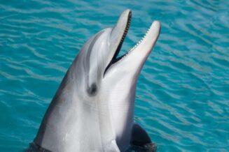 Zaskakujące ciekawostki o delfinach