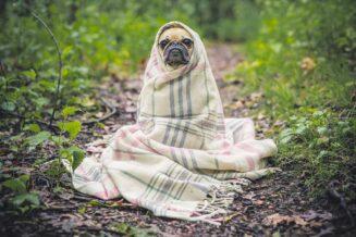 10 Najlepszych Ciekawostki o Psach