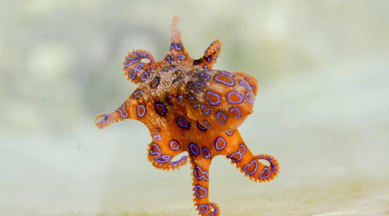zwierzę morskie